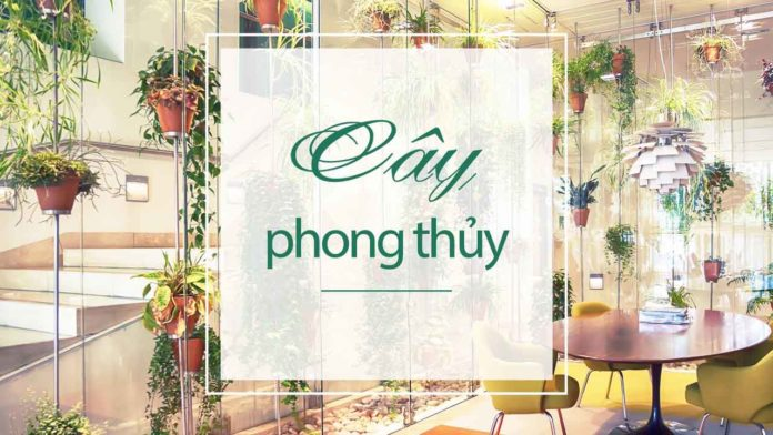 cay-phong-thuy-banner
